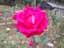 緑の館 バラ図鑑: ドゥフトボルケ(フレグラント クラウド)