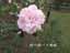 緑の館 バラ図鑑: ボニカ82
