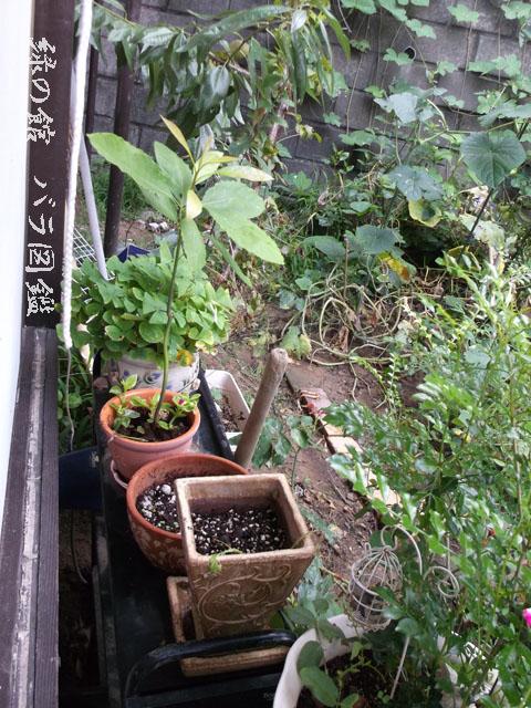 緑の館 バラ図鑑: 小さな庭南側